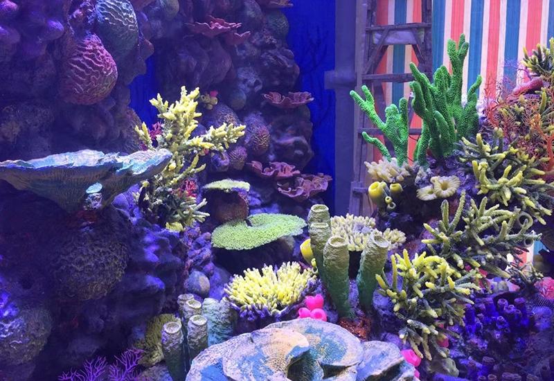 珊瑚礁造景设计
