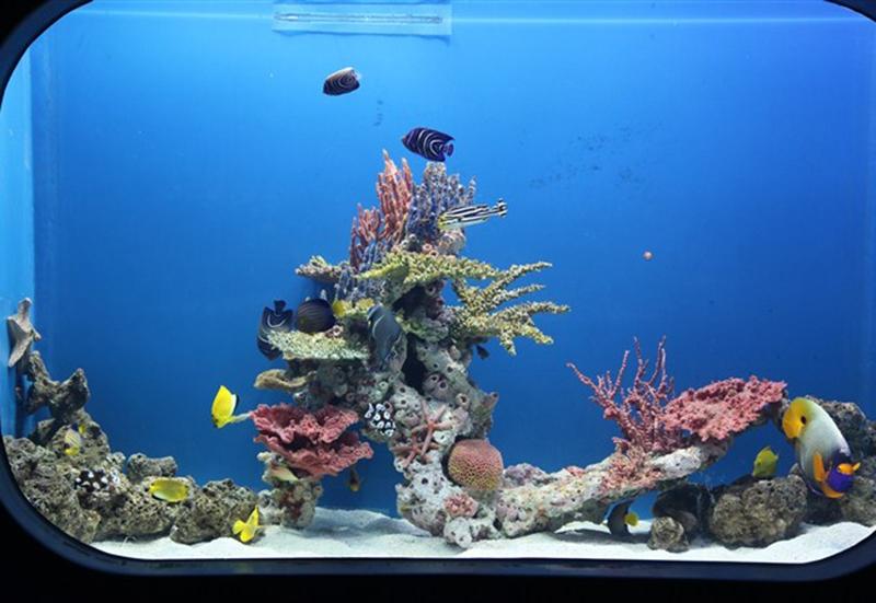武汉珊瑚礁造景