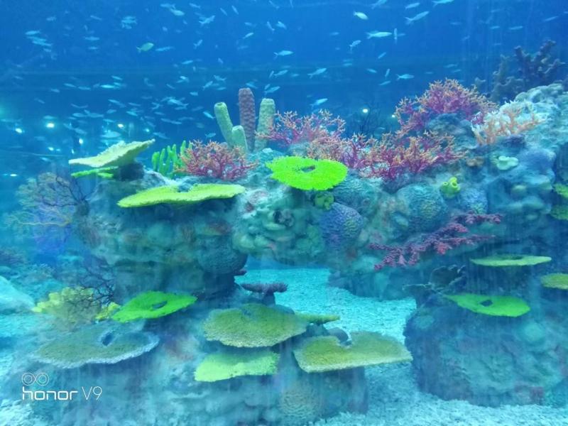 仿真珊瑚造景
