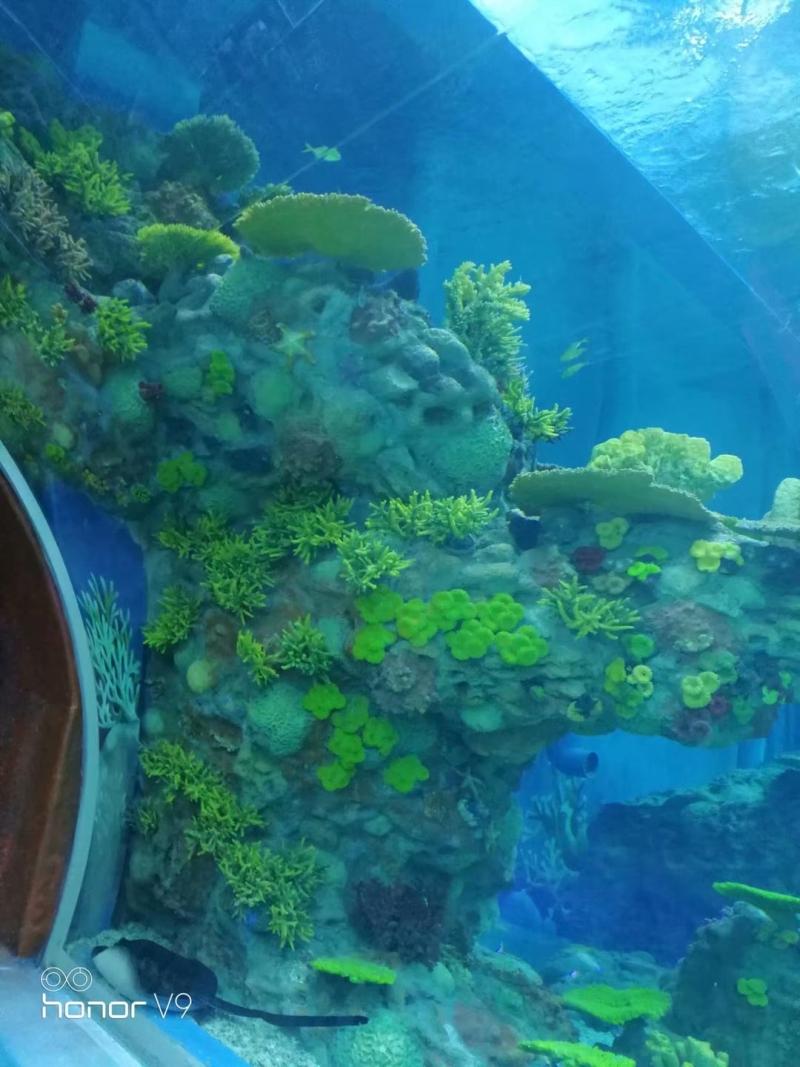 海底世界展池