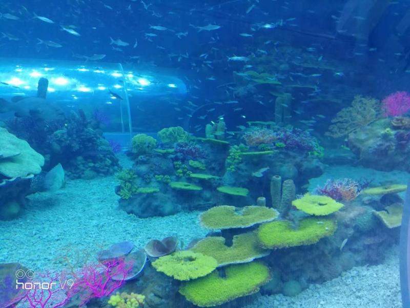 海洋公园造景