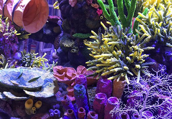 珊瑚造景施工