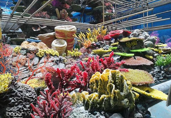人工珊瑚展池