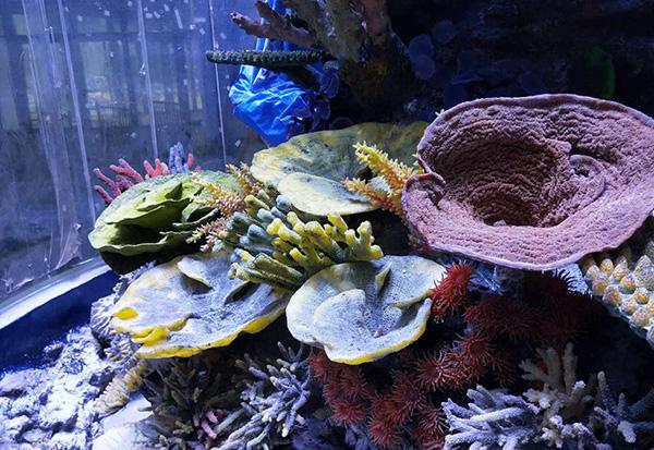 海底世界珊瑚礁