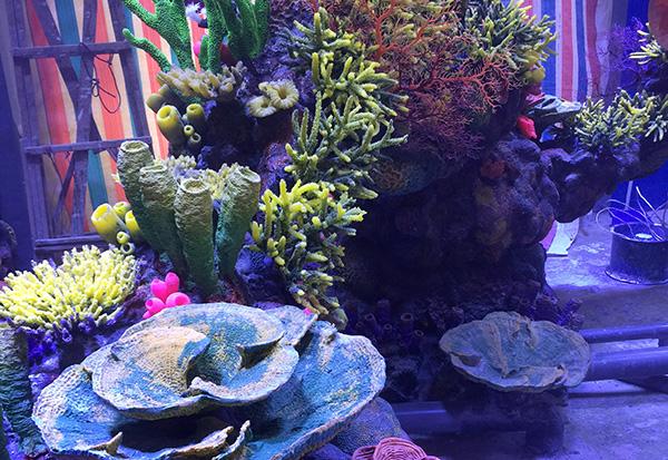 水下珊瑚礁造景