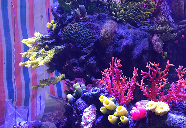 秦皇岛水下珊瑚造景