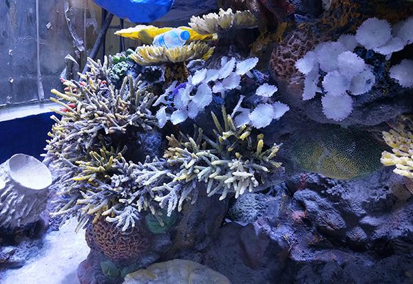 水下珊瑚造景施工
