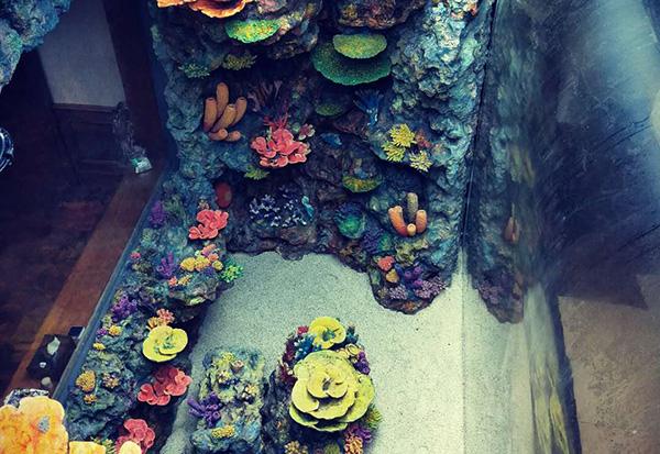 水下珊瑚礁造景设计