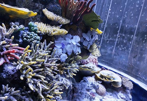 海洋公园水下造景