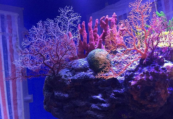 秦皇岛人工珊瑚