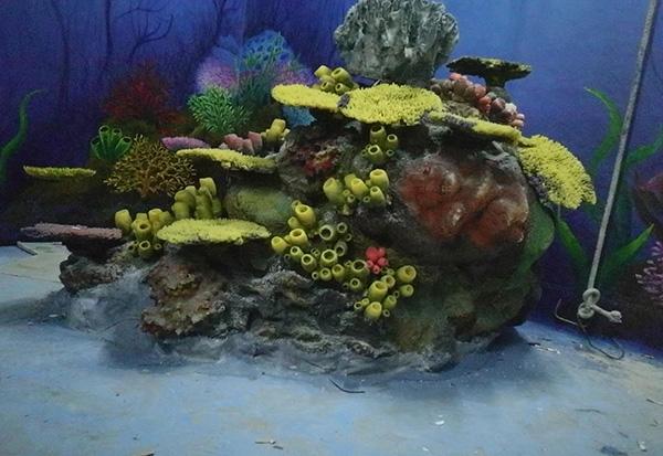 珊瑚造景展池