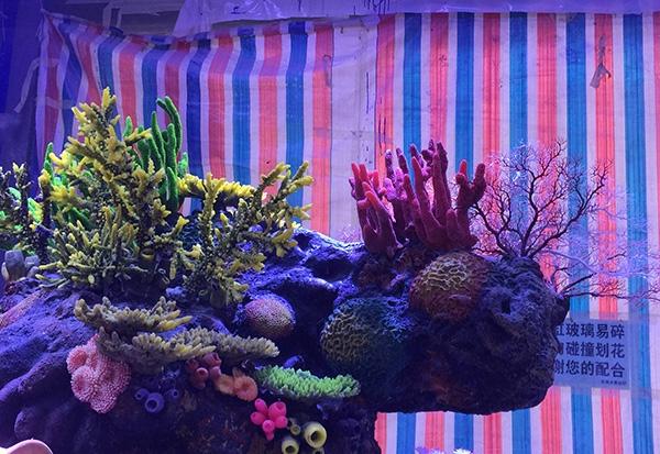珊瑚造景展池施工