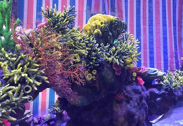水下珊瑚造景
