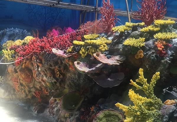 仿真珊瑚展池施工