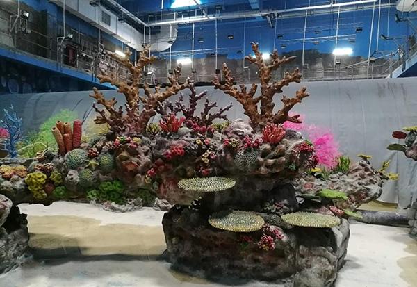秦皇岛珊瑚展池