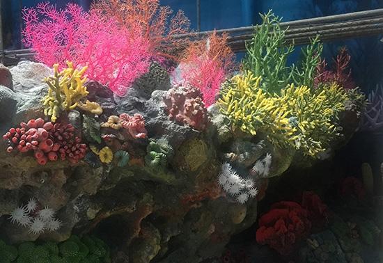 珊瑚展池制作