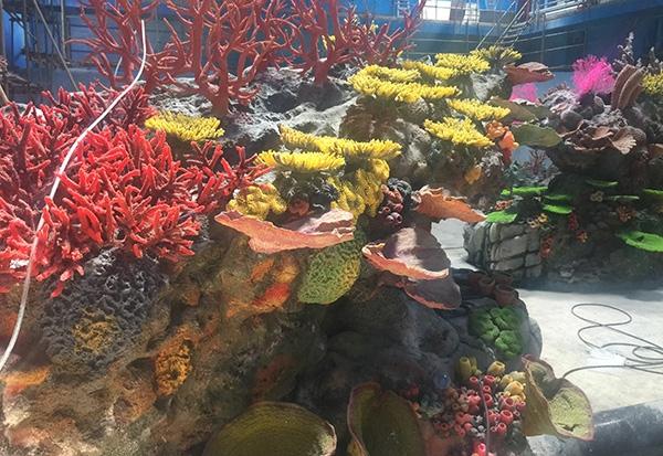 水下珊瑚展池