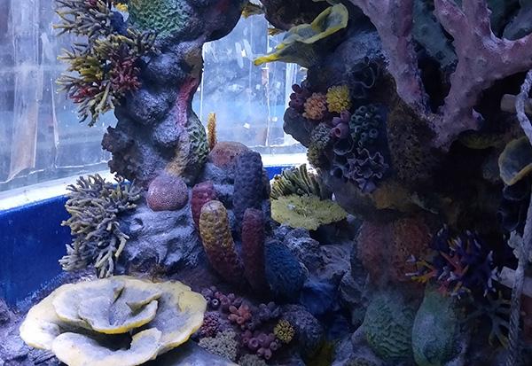 人工珊瑚礁