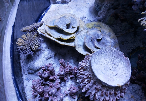 人造珊瑚礁