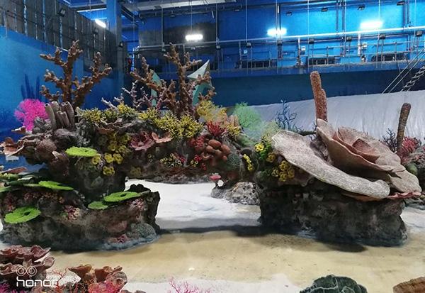 珊瑚礁施工