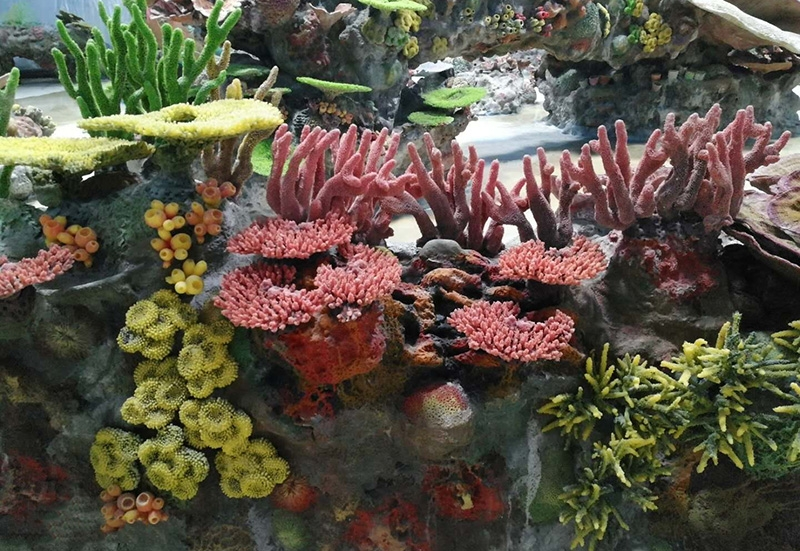 珊瑚礁造景施工