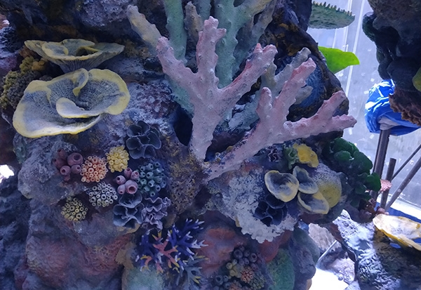 珊瑚礁设计