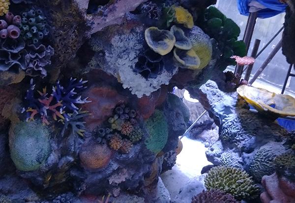 珊瑚礁造景展池