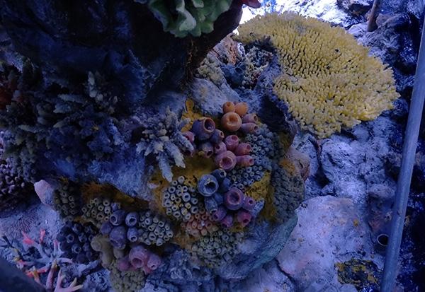 珊瑚礁造景哪家好