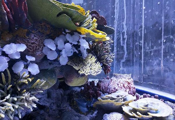 珊瑚礁设计施工