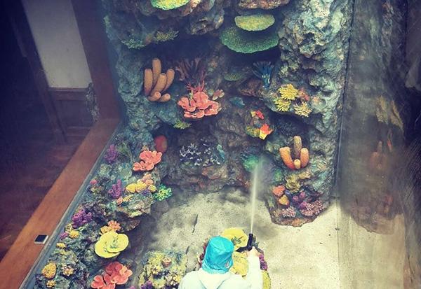 珊瑚礁造景展池公司