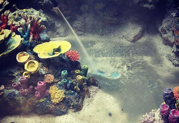 珊瑚礁造景公司