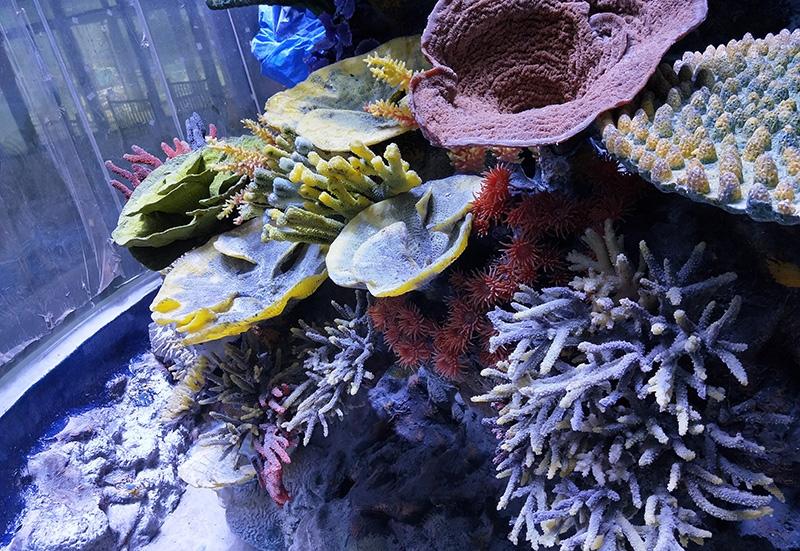 珊瑚礁造景