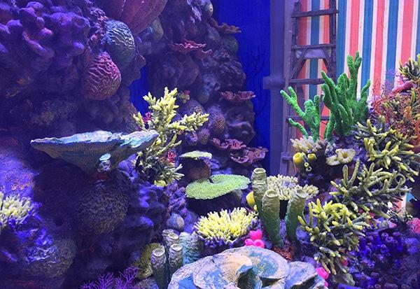 水下珊瑚礁