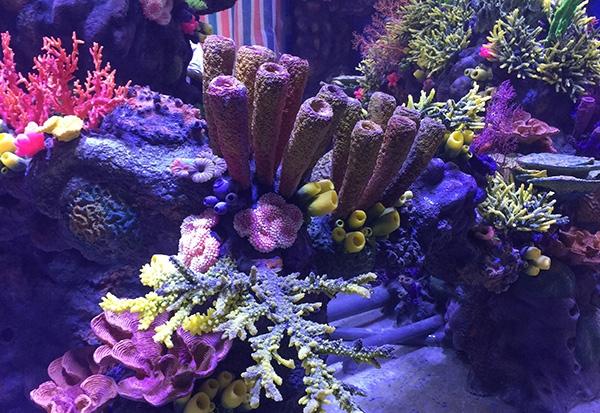 珊瑚礁石造景