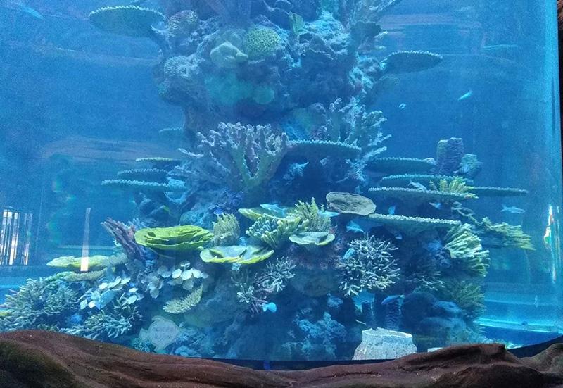 海洋公园海兽池造景