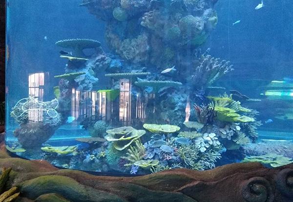 海兽池造景设计