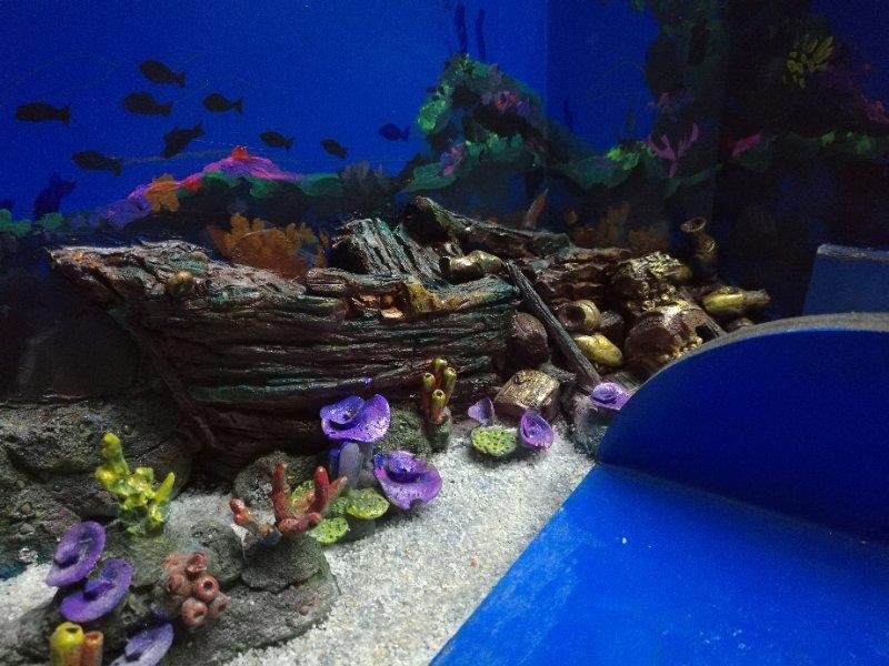 海豚展池设计