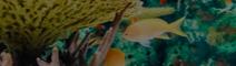 水下珊瑚礁石造景